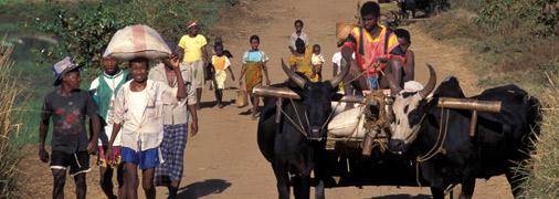 506×180_malagasy_road.jpg